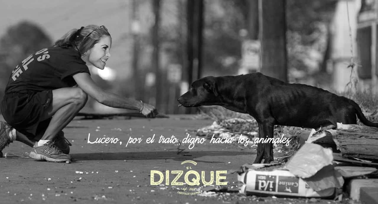 Lucero por el trato digno a los animales / ElDizque.com