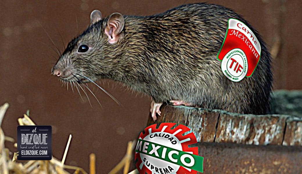 La Secretaría de Salud aprobó el consumo de carne de rata para la población mexicana 1