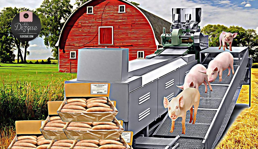 """Porcicultores denuncian a la OMS por discriminar a los cerdos — """"Están deprimidos"""", aseguran 1"""