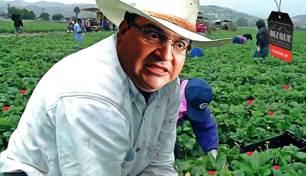 Localizan a Javier Duarte en la pisca de la fresa en Carolina del Norte 5