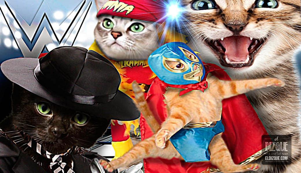 Para llegar a una mayor audiencia, WWE comenzará a promover luchas de gatos 1