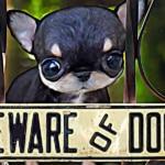 Los perros más peligrosos del mundo son los Chihuahua, aseguran expertos 1