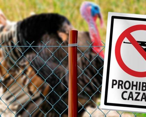 El guajolote ingresa a la lista de especies en peligro de extinción 3