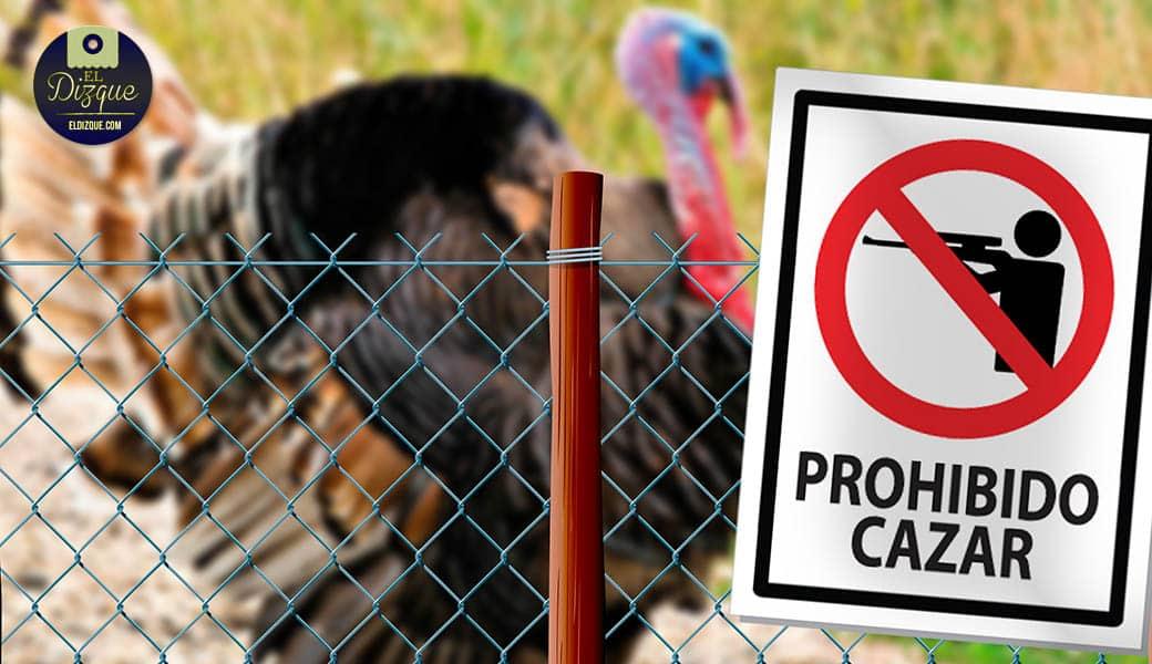 El guajolote ingresa a la lista de especies en peligro de extinción 1