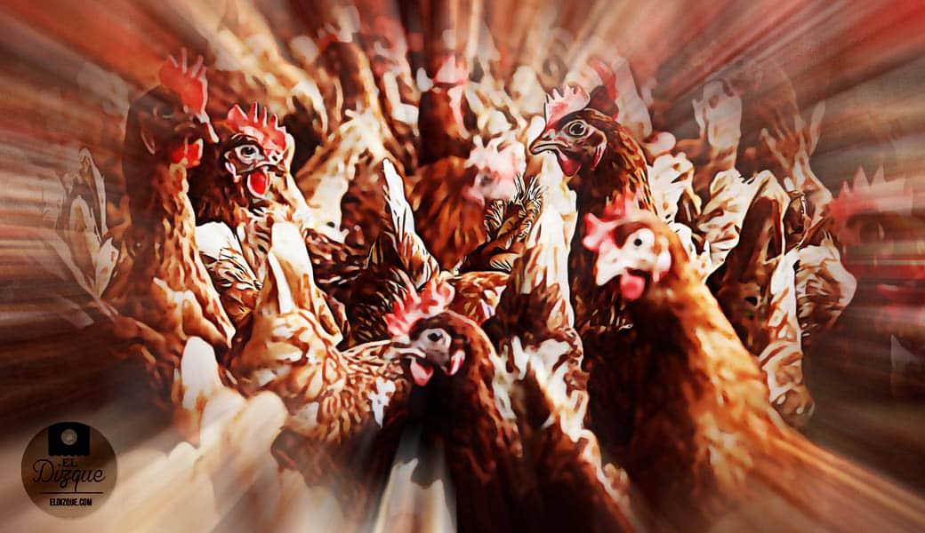 Advierten sobre el peligro de una rebelión de pollos 1