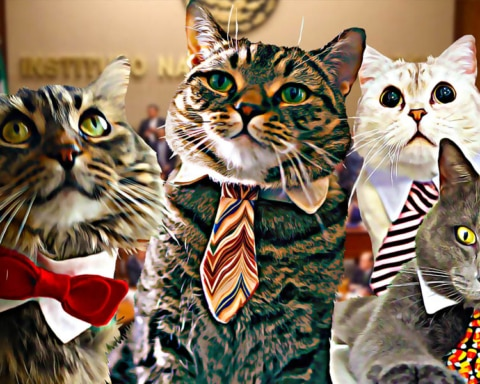 Descubren que varios candidatos a diputados eran en realidad gatos 11