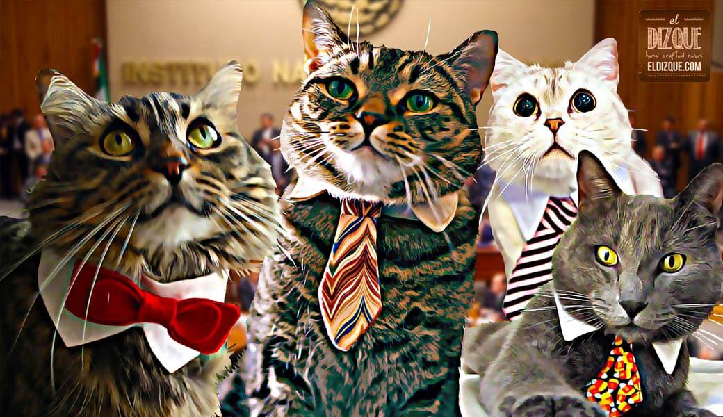 Descubren que varios candidatos a diputados eran en realidad gatos 23