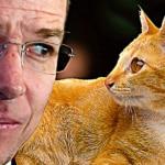 Un gato supera a Ricardo Anaya (y a Meade) en las encuestas 7