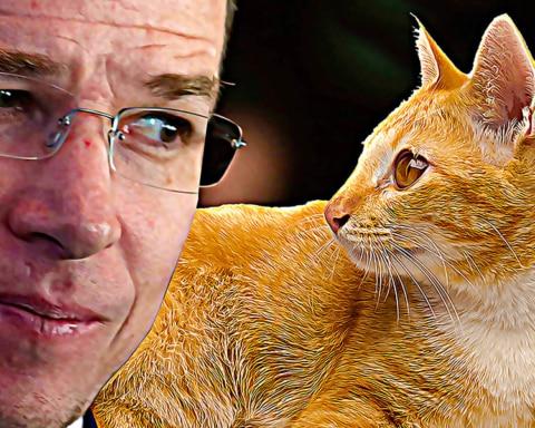 Un gato supera a Ricardo Anaya (y a Meade) en las encuestas 3
