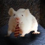 PETA sigue causando polémica: Ahora pone en jaque al Ratón Pérez 2