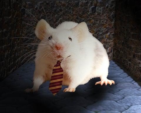 PETA sigue causando polémica: Ahora pone en jaque al Ratón Pérez 1