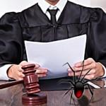 Araña presenta denuncia por invasión de propiedad 4